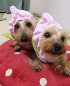 Dogschool-B.P☆